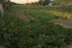 Transnistria 59